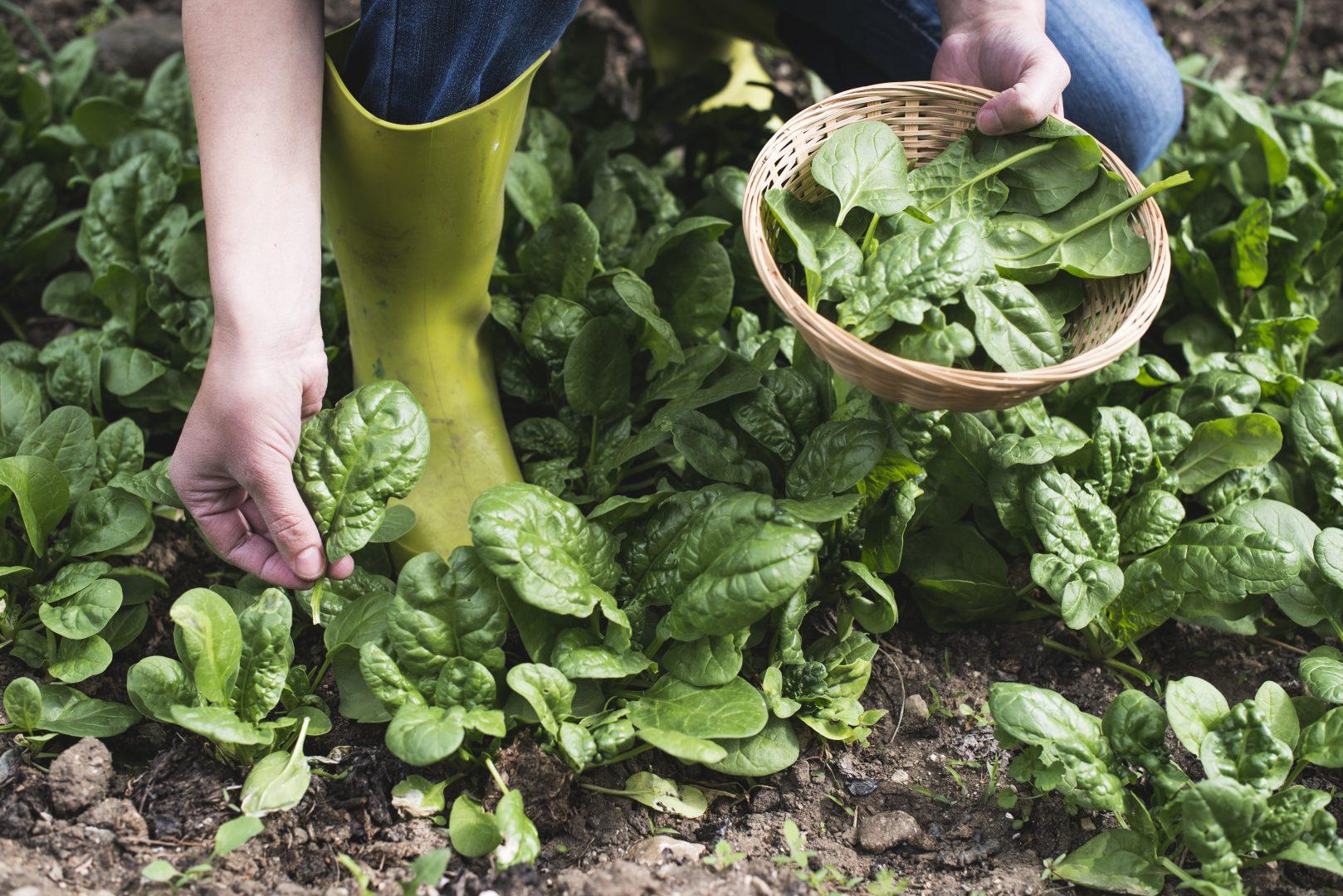Permaculture : l'assurance d'une récolte bio